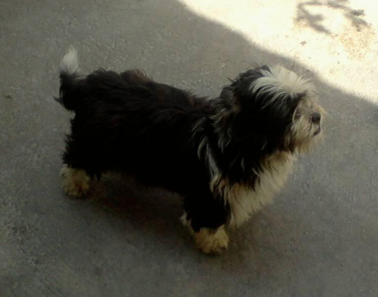 Profile picture for user Brandooo