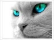 Profile picture for user kapel murcia
