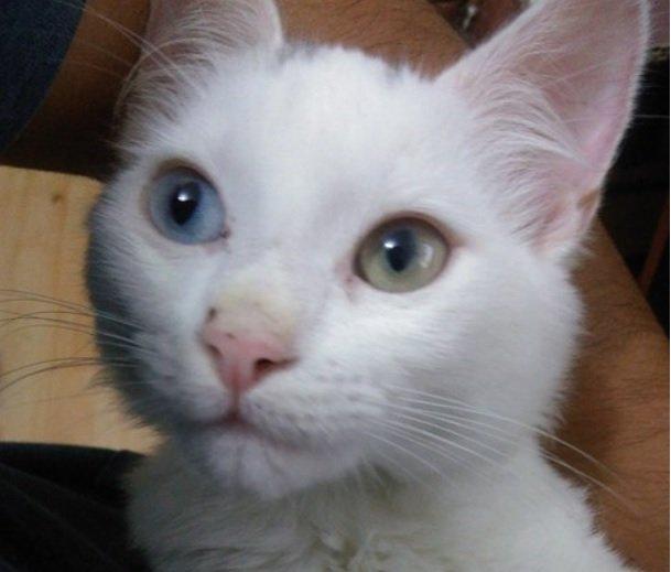 Profile picture for user vesperrr
