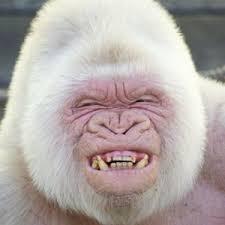 Profile picture for user AlbinoFino
